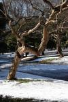 2.代々木公園:サルスベリ-06D 1102q