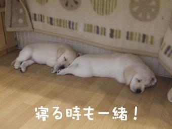 DSCF8159_一緒