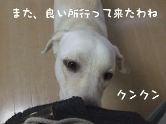 DSCF8393_くんくん