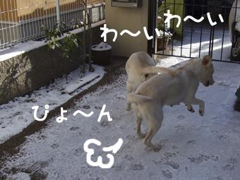 DSCF8412_雪