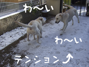 DSCF8414_雪