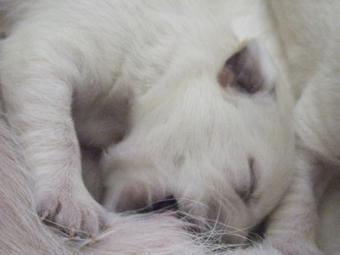 DSCF6752子犬