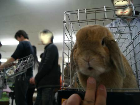 snap_wankosyoukai_20122316334.jpg