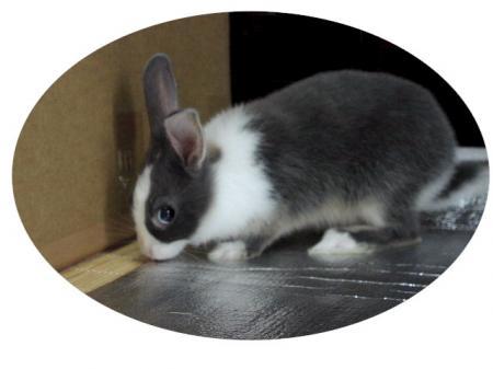 usichiro_convert_20121116221639.jpg
