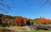 鏡山公園20101124-3