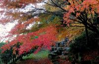 鏡山公園20101124-4