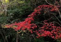 鏡山公園20101124-5
