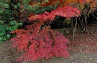 鏡山公園20101124-6