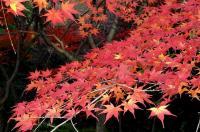 鏡山公園20101124-7