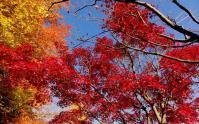鏡山公園20101124-8