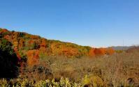 鏡山公園20101124-9