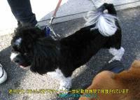 迷子のワンコちゃん20101129-1