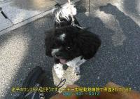 迷子のワンコちゃん20101129-2