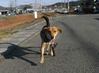 散歩20101127-1