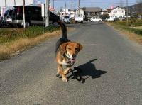 散歩20101127-2