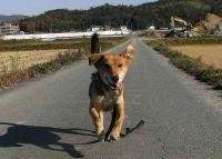 散歩20101127-3