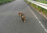 散歩20100727-1