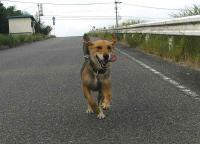 散歩20100727-2