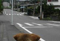 散歩20100727-4