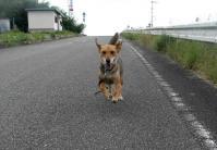 散歩20100728-1