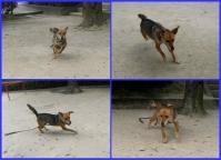 散歩20100728-3