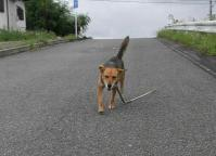 散歩20100729-2