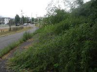 散歩20100729-3