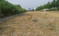 散歩20100730-2
