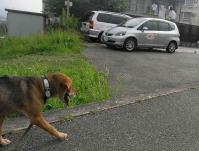 散歩20100730-3