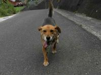 散歩20100731-3