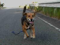 散歩20100826-3