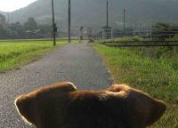 散歩20100826-4