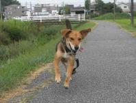 散歩20100827-3