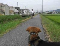 散歩20100827-4