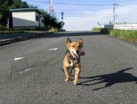 散歩20100828-4