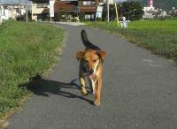 散歩20100829-3
