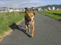 散歩20100829-4