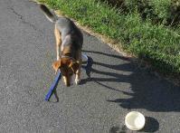 散歩20100829-5