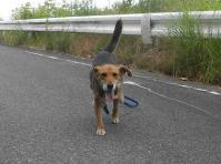 散歩20100830-1