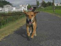 散歩20100830-3