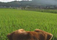 散歩20100830-4
