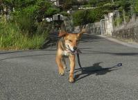 散歩20100830-5