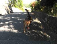 散歩20100831-2