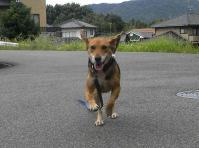 散歩20100923-1