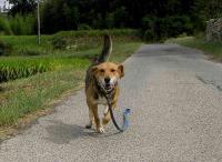 散歩20100923-3
