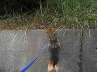 散歩20100924-1