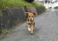 散歩20100924-2