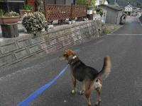 散歩20100924-3