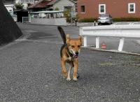 散歩20100924-4