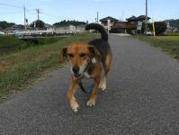 散歩20100924-5